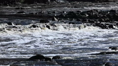 River pollution, dirty foam Stock Footage