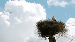 Lonely Stork Standing In The Nest Settled On Electric Pylon Stock Footage