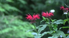 Red Flower Surrounded by Lush Greenery Stock Footage