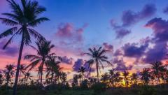 Time Lapse: Palm trees at sunset Stock Footage
