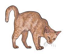 Drawing of threaten cat Stock Illustration