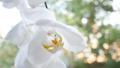 Flowers Of White Orchid In The Window Stock Footage