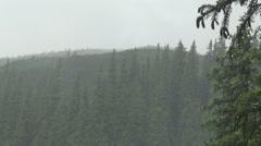 Ukraine,  spruce, Alpine pine Stock Footage