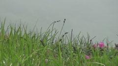 Carpathian Mountains, flower, wind Stock Footage