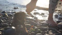 Puppy running near it owner legs in pebble beach during sunset. Sound splashing Stock Footage