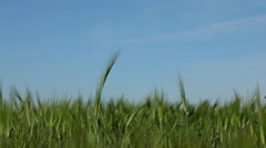 Green Field Planted With Crops Stock Footage