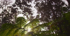 Sun Glimmering through Ferns Tracking, Big Island, Hawaii Stock Footage
