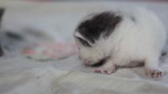 Cute white baby kitten cat, close up, shallow DOF Arkistovideo