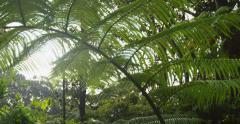 Sun Glimmering through Ferns Tracking, Big Island, Hawaii, Red Scarlet Camera Stock Footage
