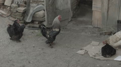 Chicken With Shed In Romania -Cine Gamma- Stock Footage