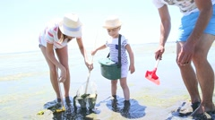 Family playing at low tide trying to find seashells - stock footage