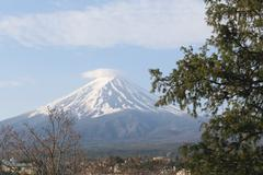 Stalk of tree and view of Mount Fuji. Stock Photos