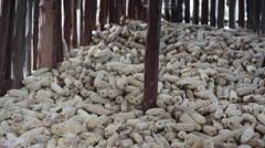 Farmer maize corn food storage in village house, Kenya, Africa Stock Footage