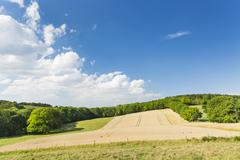 A golden rye field with blue sky on a hill in northern Eifel landscape in Ger - stock photo