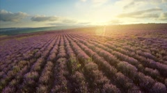 Flight over lavender meadow. - stock footage