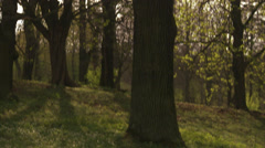 A deciduous forest, Stockholm, Sweden. - stock footage