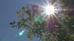 Autumn leaves on sun 4K 2160p UHD video - Sun through tree branches 4K 3840X2 Stock Footage
