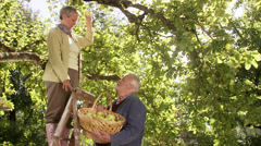 An elderly couple picking apples a sunny day, Sweden. - stock footage