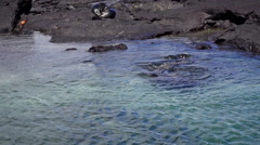 Galapagos Sea Lions in Shallow Water - stock footage