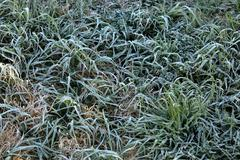 Frost, Ice on grass after a heavy frost in Goulburn, NSW, Australia - stock photo