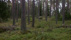 Tree trunks in a forest, Stockholm, Sweden. Stock Footage