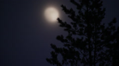 A moon a tree in the night, Sweden. Stock Footage