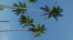 Palm Trees on Phi Phi Stock Footage