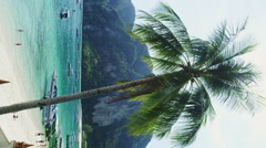 Palm Tree at the Beach of Ton Sai Bay of Phi Phi Don Stock Footage