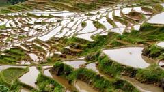 Terraced Rice Field Stock Footage