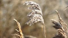 Frost on the spike on a sunny winter day Stock Footage