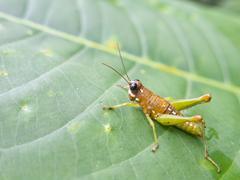 Grasshopper in a green jungle. Stock Photos