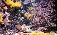 Coral reef aquarium in zoo Stock Photos