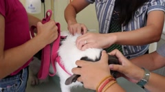Veterinary Surgeon Giving Vaccine Injection to the Dog Stock Footage