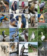 Different animals collage - stock photo