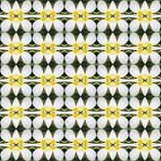 Blossom of White Frangipani flowers seamless - stock illustration