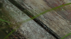 Ant running on wood. close-up Stock Footage