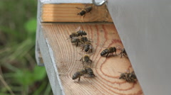 Entrance to the hive and bees coming and going Stock Footage