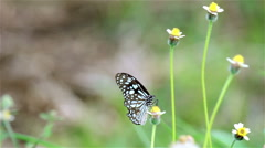 Beautiful meadow with bright butterflies. Stock Footage