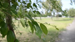 Leaves in a gust of wind sways the tree Stock Footage