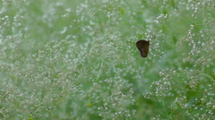 Brown butterfly sitting on a plant Stock Footage