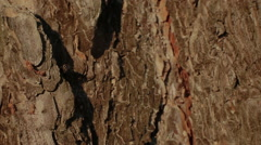 Ant and fly on a tree bark - stock footage