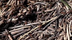 Life ants Stock Footage