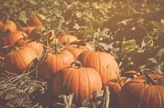Halloween Pumpkin with Retro Instagram Style Filter Kuvituskuvat