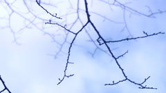 Defoliated branches in the wind an autumn day, Sweden. Stock Footage