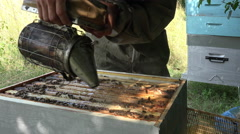 Smoking out bees and cleaning of top frames Stock Footage