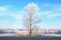 Trees covered with hoarfrost next to the road Stock Photos
