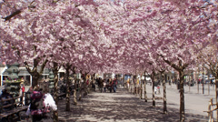 People walking in a flowery park, Kungstradgarden, Stockholm, Sweden. Stock Footage
