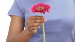 A flower in the hands of a woman, close-up. Stock Footage
