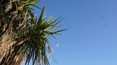 Seagulls fly against blue sky and palm trees on coastline, sun shining Stock Footage