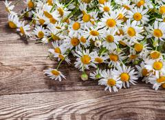 Design element. camomile on the old board - stock photo